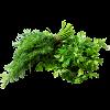 Семена пряных и зеленных культур