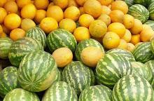 Секреты хорошего урожая арбуза и дыни
