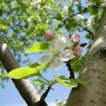 Календарь садово-огородных работ в апреле