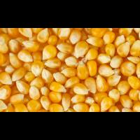 Кукурудза зернова Любава 279 МВ