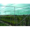 Теплица укрытая затеняющей сеткой GROWTEX