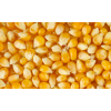 Кукурудза зернова Кадр 267 МВ (1кг)