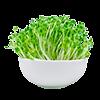 Все для микрозелени