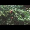 Сетка защита от птиц ORTOFLEX зелёная, размер: ячейки 12х10мм, рулона 10х2м
